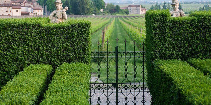 Serego Alighieri winery is located in the heart of Valpolicella area, in Veneto region. It is worldwide know for the Amarone wine.