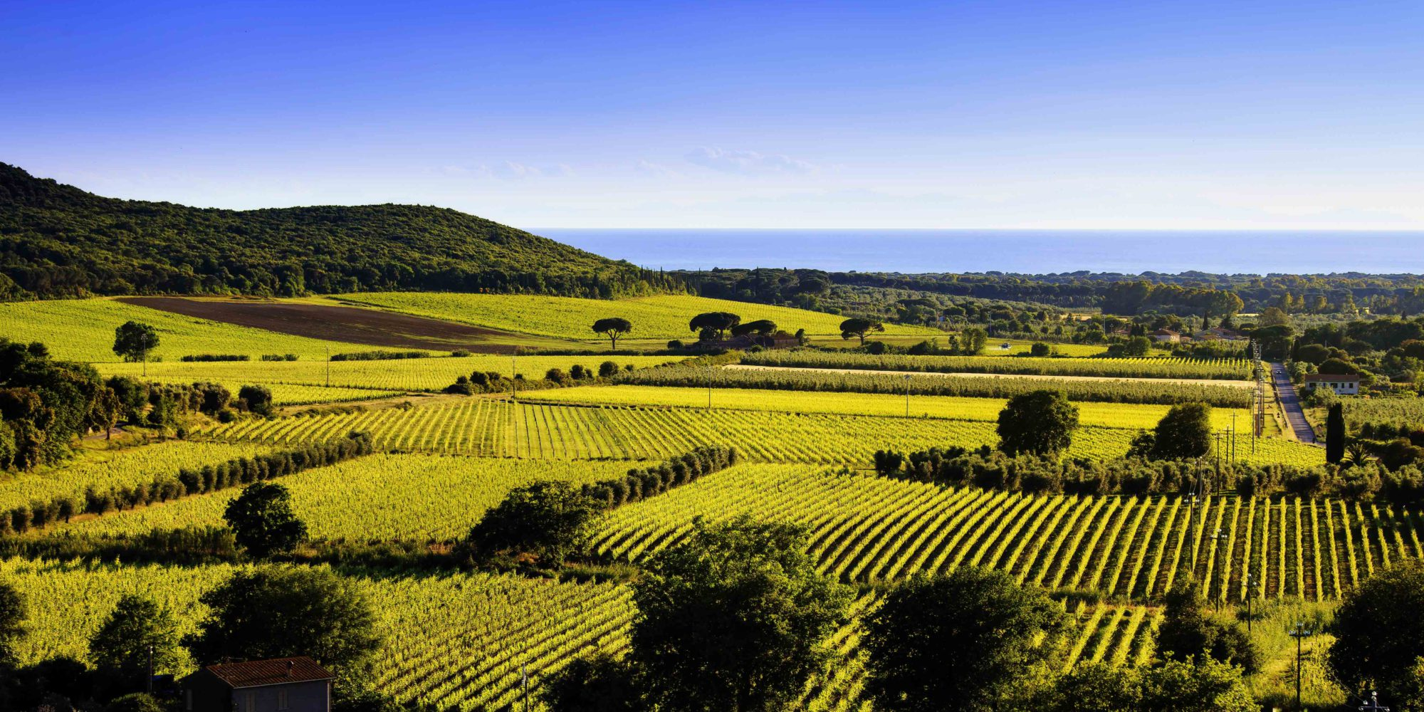 Bolgheri vineyards give us the best Super Tuscan wines, just to mention the most famous: Sassicaia.
